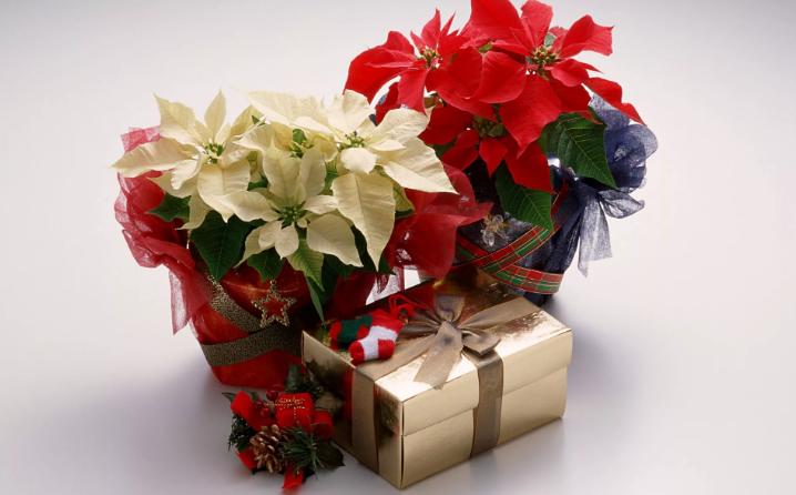 Цветок в подарок девушке