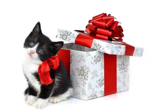 Котенок на день рождения