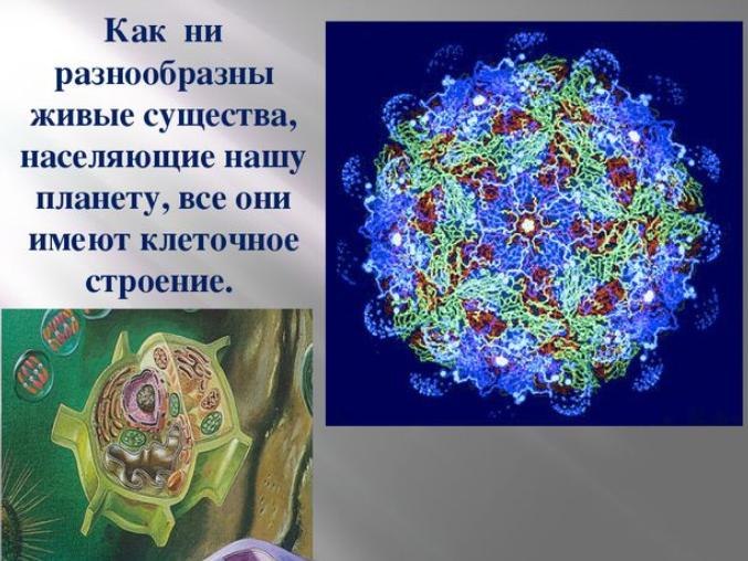 Что такое живой организм биология 5 класс. Таблица живых организмов.