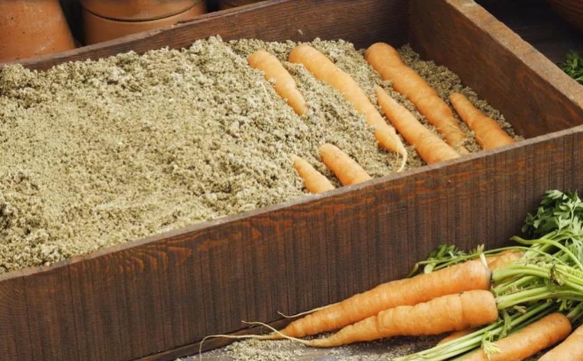 Как сделать семена моркови в домашних условиях