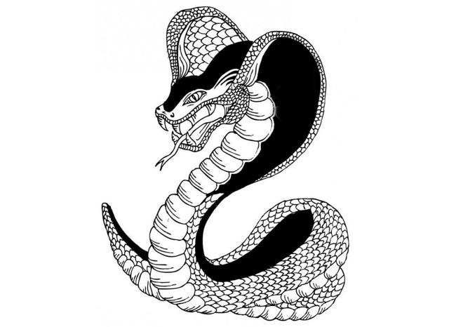 татуировка змея для девушки