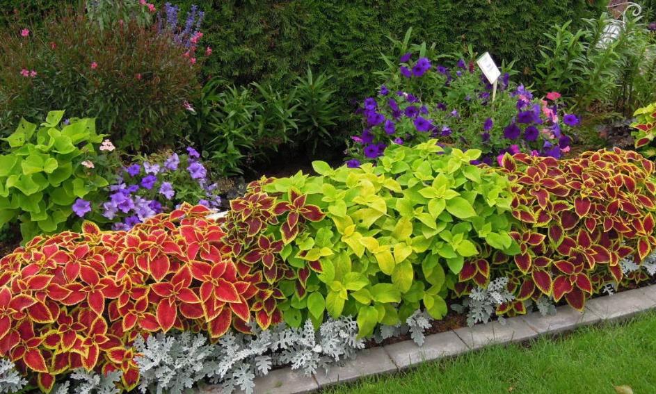 Цветы для сада однолетники