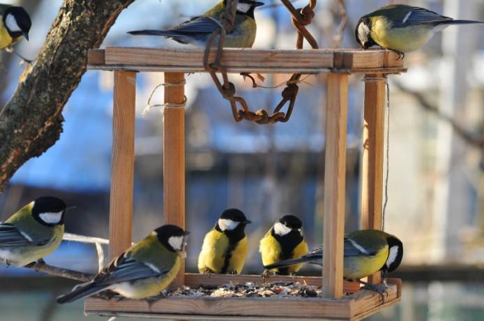Птицы зимой окружающий мир. Какие птицы остаются зимовать. Как зимующие птицы готовятся к зиме. Кормушки для птиц своими руками из подручных материалов.