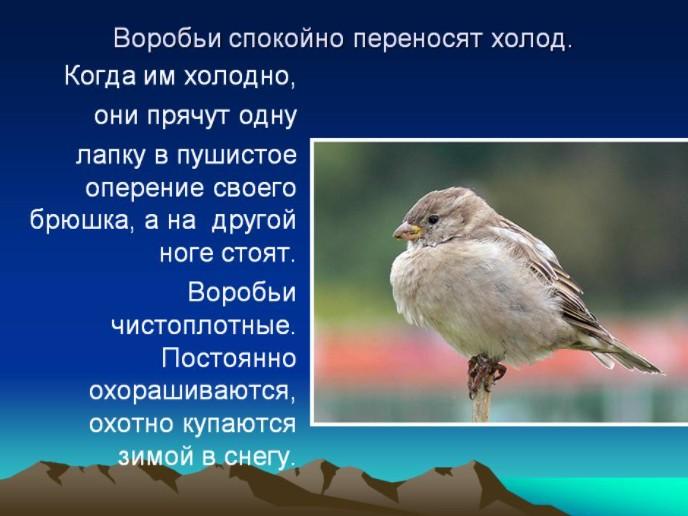Как птицы выживают зимой
