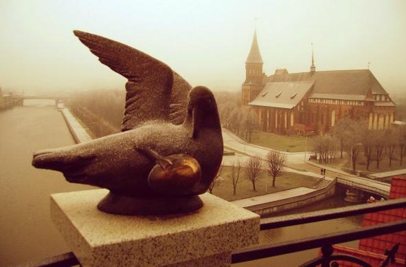 Птица счастья в Калининграде