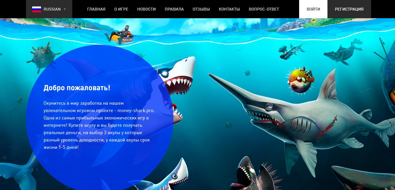 Money-Shark